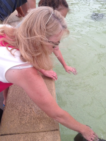 Mom feeding a stingray