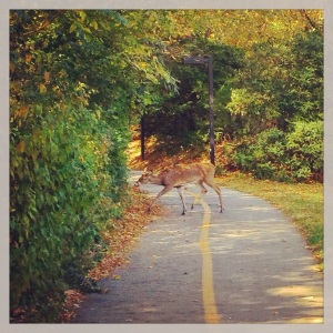 Saw a deer crossing my running trail. I was delighted!