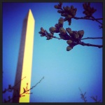 No cherry blossoms in bloom yet, but getting closer!