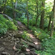 View of the hiking trail going up Sharp Mountain. You may need hiking boots for this climb!
